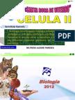 celula II