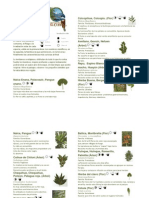Descripción de flora Nativa Chile