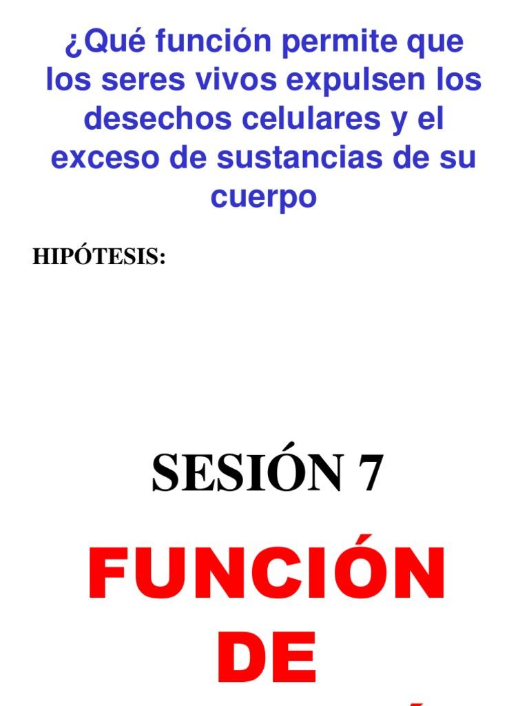 EXCRECIÓN - Sistema urinario - Riñón