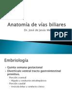 Anatomía de vías biliares