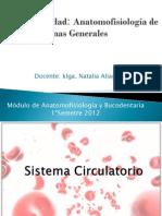 Sistemascirculatorio2