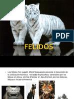 Feli Dos