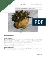 74076417 Manual de Cultivo de La Maca