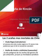 ARAÑA DE RINCON ppt