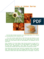 Incan Berry Grow Instructions