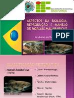 Aspectos da biologia, reprodução e manejo da traíra