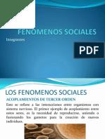 FENOMENOS SOCIALES - EL ARBOL DE LA VIDA