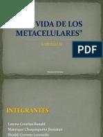 Libro Del Conocimiento CAP-METACELULARES