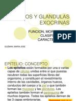 Clase Epitelios y Glandulas Exocrinas2(1)