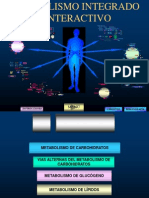 Copy of Metabolismo Integrado e Interactivo