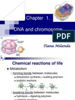 1.+Dna+and+Chromosome