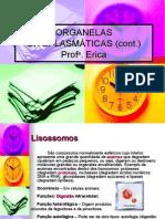Biologia Erica Organelas Citoplasmaticas