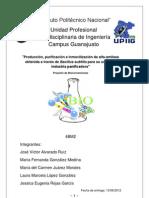 Producción, purificación e inmovilización de alfa-amilasa obtenida a través de Bacillus subtilis para su uso en la industria panificadora