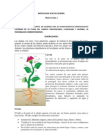 Reporte 1 Morfologia Vegetal Externa
