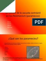 La función de la vacuola contráctil en los Paramecium (paramecios)