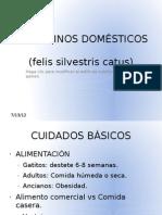 LOS FELINOS DOMÉSTICOS - RAZAS