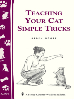 Teaching Your Cat Simple Tricks