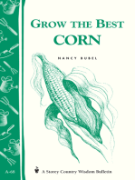 Grow the Best Corn