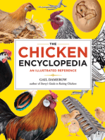 The Chicken Encyclopedia