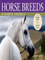 Horse Breeds of North America