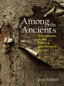 Among the Ancients: Adventures in the Eastern Old-Growth Forests