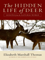 The Hidden Life of Deer