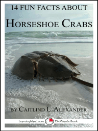 14 Fun Facts About Horseshoe Crabs