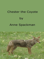 Chester the Coyote