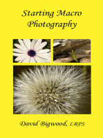 Starting Macro Photography