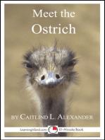 Meet the Ostrich
