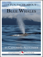 14 Fun Facts About Blue Whales