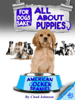 All About American Cocker Spaniel Puppies