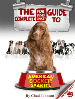 The Complete Guide To The American Cocker Spaniel