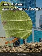 Ants, Aphids and the Gold(m)an Sac(h)s