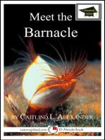 Meet the Barnacle