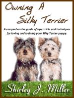 Owning a Silky Terrier