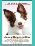 Animal Reincarnation & Animal Life after Death