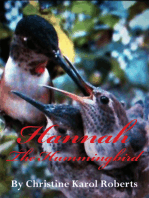 Hannah the Hummingbird