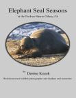 elephant-seal-seasons-at