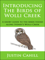 Introducing the Birds of Wolli Creek