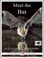 Meet the Bat