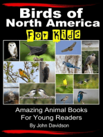 Birds of North America For Kids