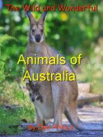The Wild and Wonderful Animals of Australia