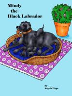 Mindy the Black Labrador