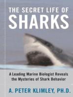 The Secret Life of Sharks