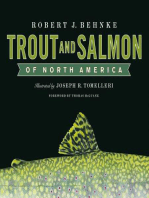 Trout and Salmon of North America