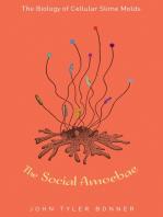 The Social Amoebae
