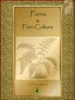 Ferns and Fern Culture