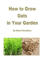 How to Grow Oats in Your Garden