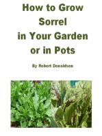 How to Grow Sorrel in Your Garden or in Pots